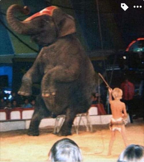 Les éléphants du cirque Pinder jean Richard présentés par Tony Hochegger et son fils Ronny ( archives Jean Arnaud et Ronny Hochegger)