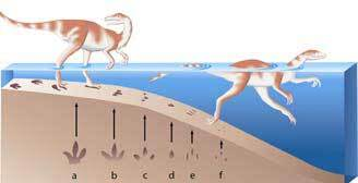 Dinosaure qui nage