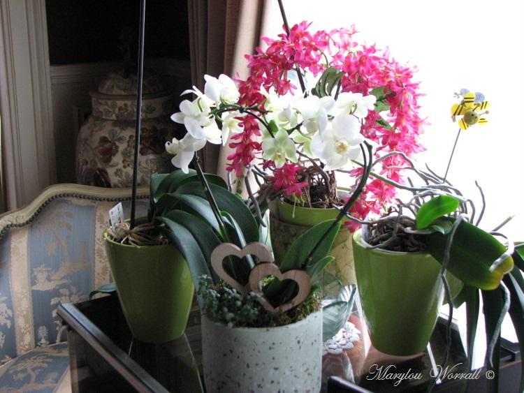 Mon coin fleuri s'est enrichi