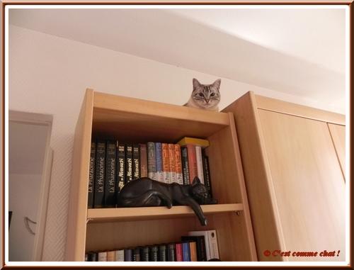 Du haut de ma bibliothèque ...