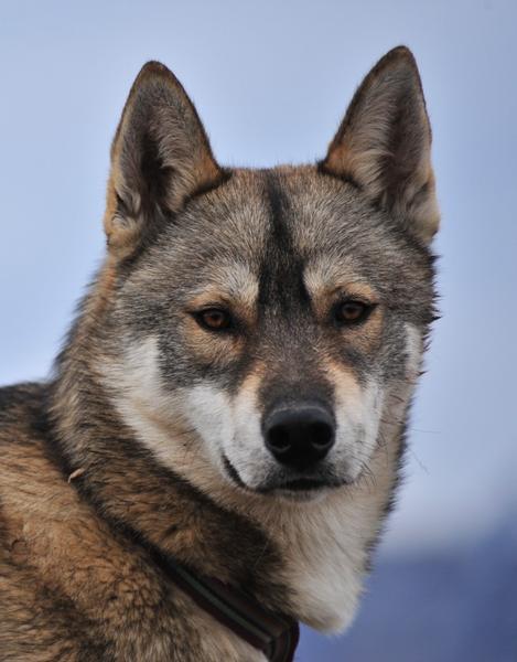 Julius Dolina Volka