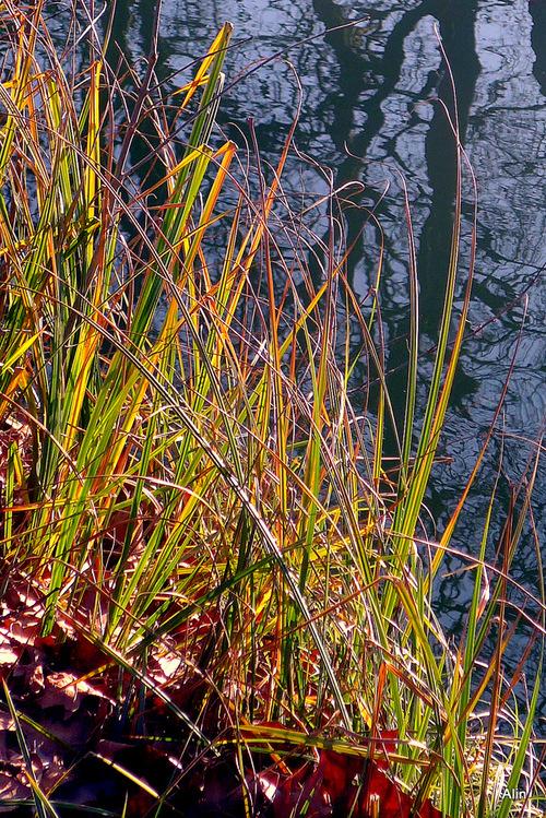 Des herbes et des reflets