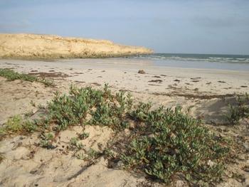 Mauritanie Cap Tafarit