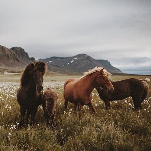 Image de horse, animal, and nature