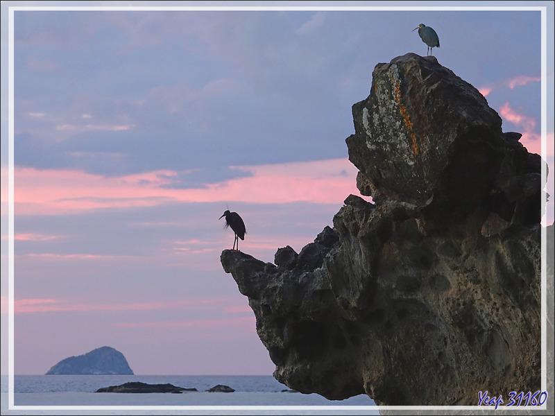 Une fois le soleil couché, retour à Tsarabanjina où deux Aigrettes des récifs ont retrouvé leur quartier nocturne - Mitsio - Madagascar