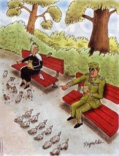 humour-oiseaux.jpg