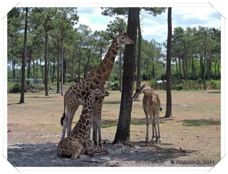 Zoo du Bassin d'Arcachon à La Teste de Buch - 9/20