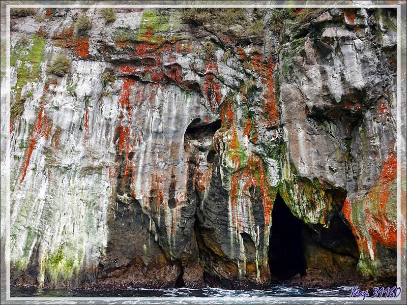 Au pays des merveilles : quand la nature fait dans l'abstrait - Nightingale Island - Tristan da Cunha
