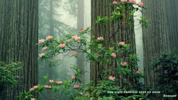 Foret-sequoia.jpg
