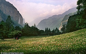 lauterbrunnen-wildflowers-2-b