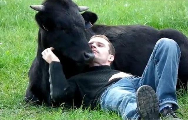 Christophe Thomas a sauvé ce beau taureau de la Tauromachie