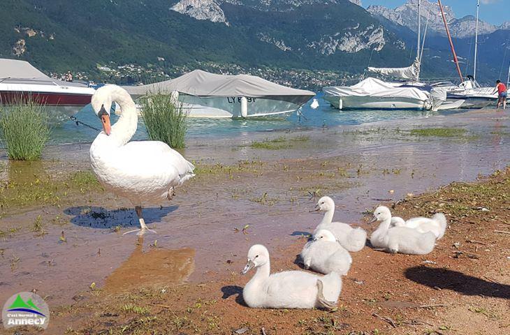 lac d'Annecy, aujourd'hui.....