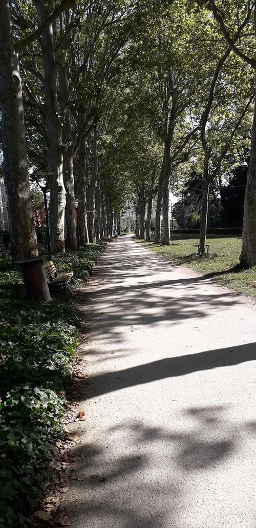 La forêt de Mamitta