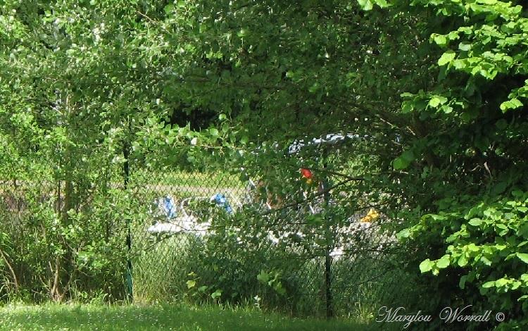 Souffelweyersheim 67 : Bateaux sur le canal