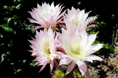 Mon pot en fleurs