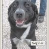 Sophie B 5