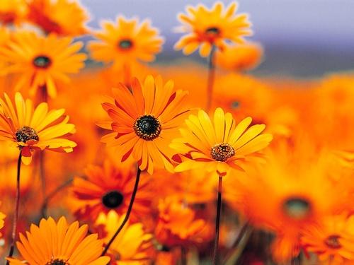 在花的世界
