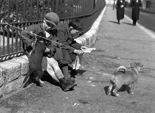 Les chiots en laisse - Paris 1934