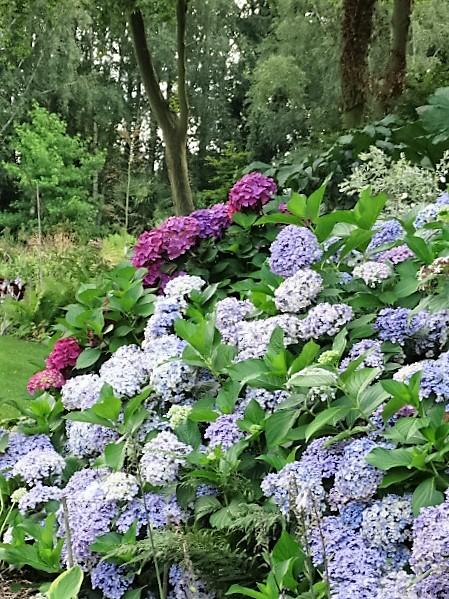 """Une visite au jardin """"Les Hydrangéas"""""""