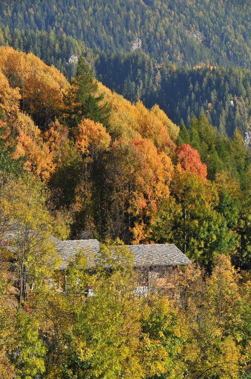Couleurs d'automne en Vallée d'Aoste (5)