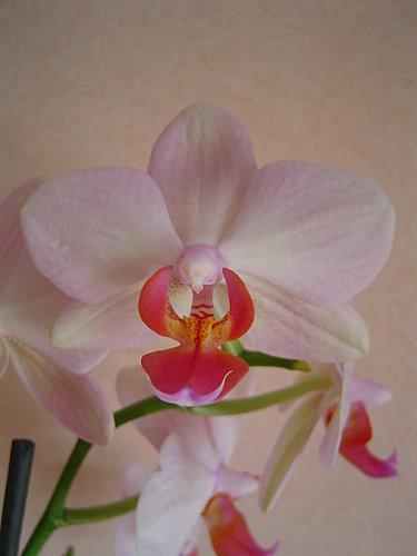 orchidee-4.jpg