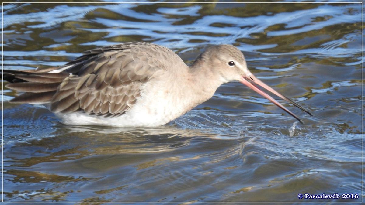 Réserve ornitho du Teich - Décembre 2016 - 3/13