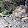 En compagnie de la tortue étoilée (1) - Photo : Olivia (2015)
