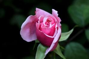 Blossom Time1