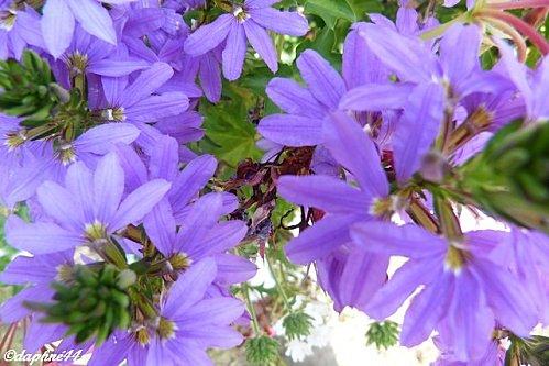 fleursble.jpg