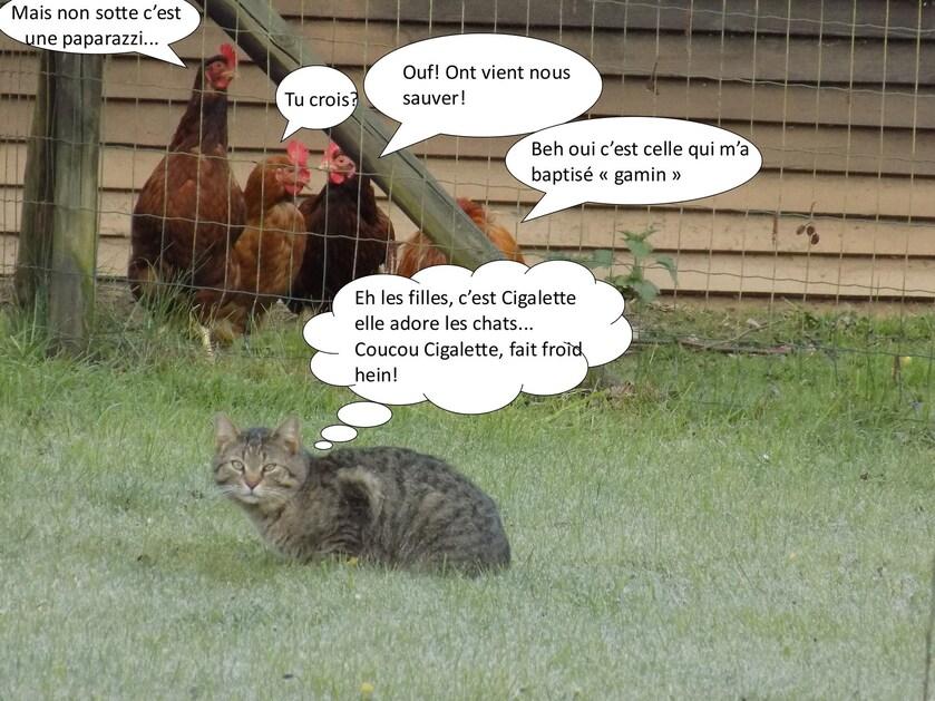 Les poules, la chat et la corneille...