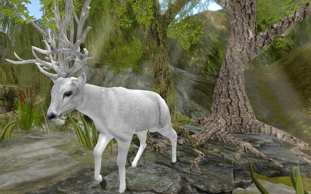 Cerf Blanc