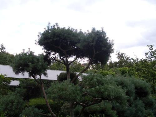 Le jardin noir, la partie supérieure