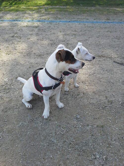 Iago et Dolly pour le pas bouger à 2 !