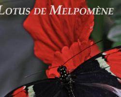 Le Lotus de Melpomène