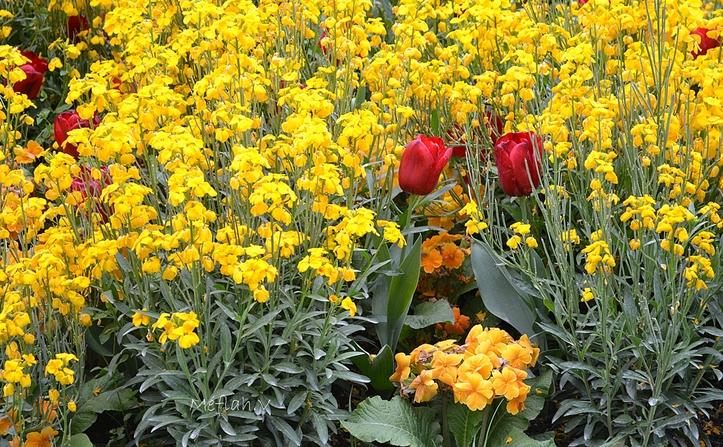 La photo du weekend : Fleurs de Printemps