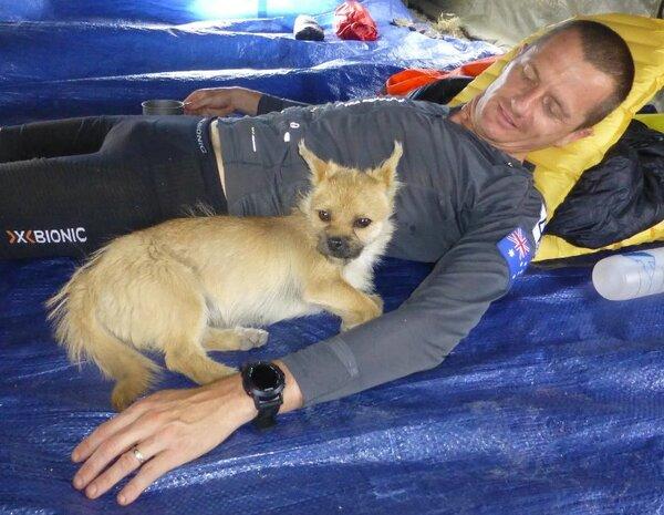 L'incroyable histoire de Gobi, le chien marathonien