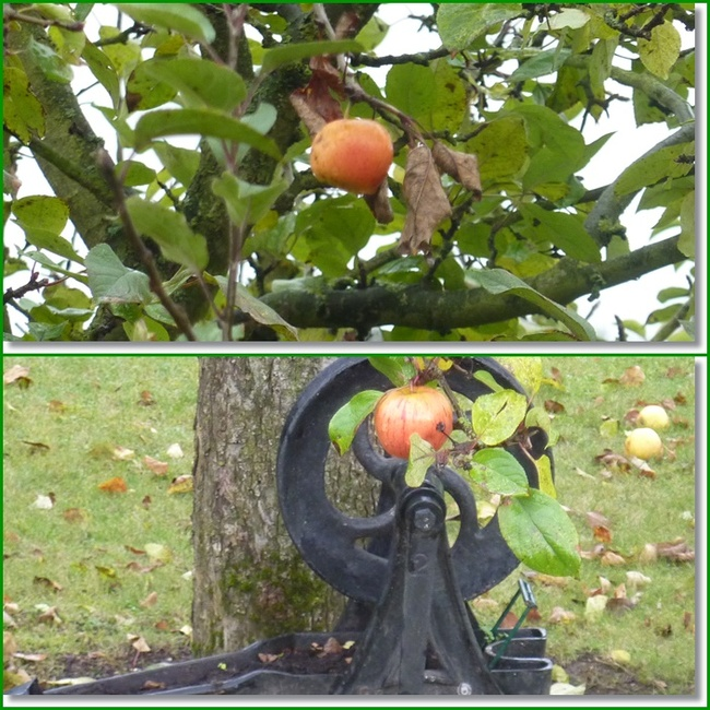 Pommes d'Automne