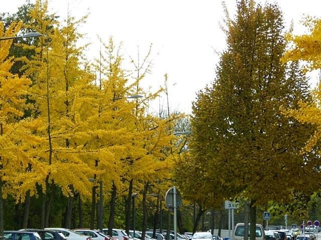 Metz en automne 4 Marc de Metz 2011