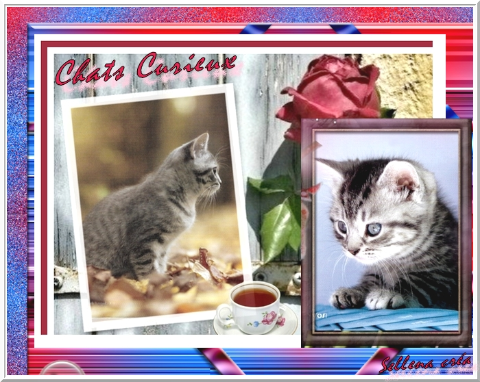**Chats encore**Cartes