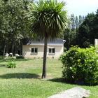 Dans mon jardin, la cordyline austarle