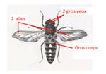 d'autres insectes : les abeilles