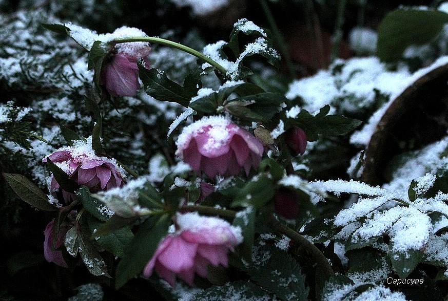 Un hiver express