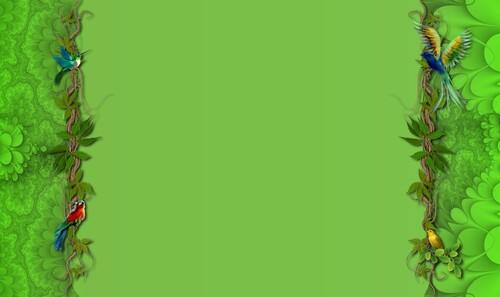 vert oiseaux