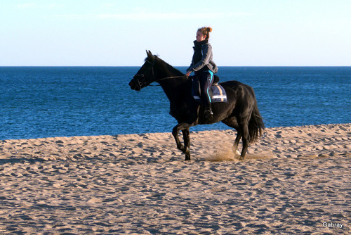 Barcarès : la plage et les cavaliers ...
