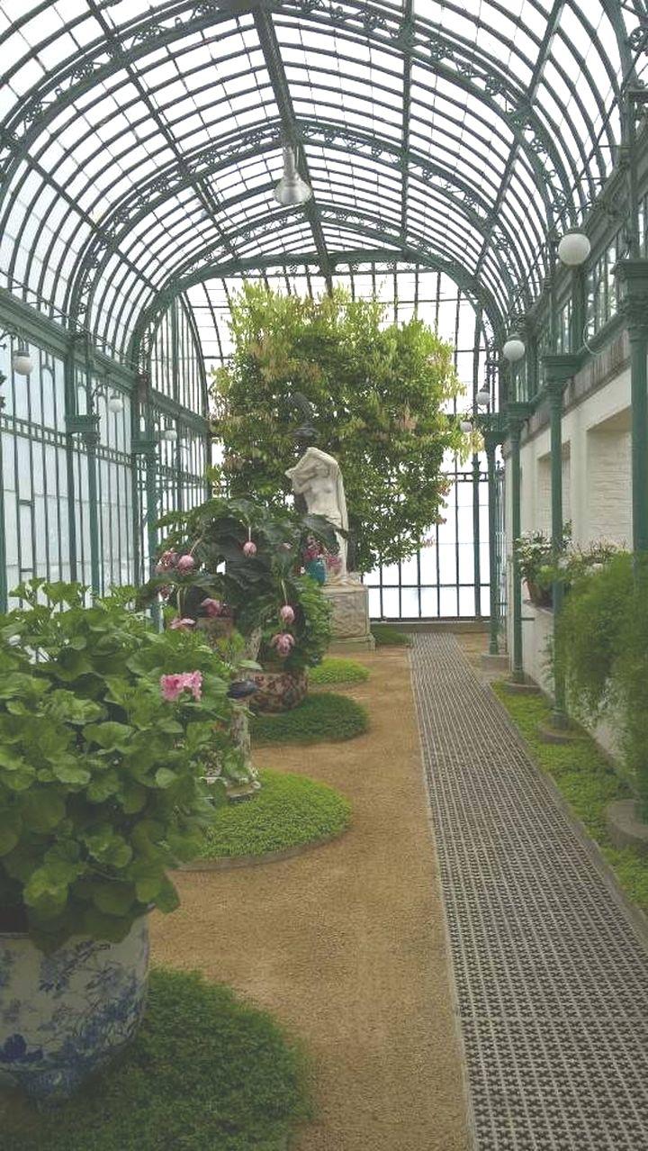 Suite à Laeken dans les serres royales.