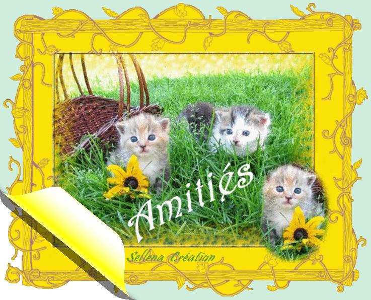 Cartes**Amitiés**