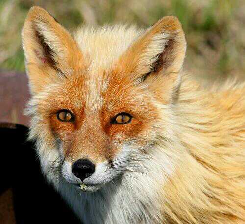 Protégeons les animaux sauvages libres contre les actes de cruauté