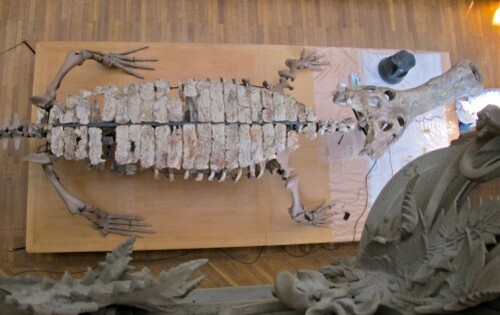 Sarcosuchus 0392
