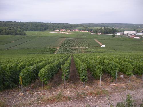 La montagne de Reims: terre de mes ancêtres Beaufort, Canot.