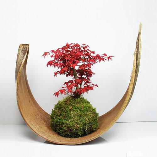 Une autre forme d'art japonais pour amateur de nature